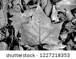 fall leaves. halftone with... | Shutterstock . vector #1227218353