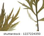 green leaves background on... | Shutterstock . vector #1227224350