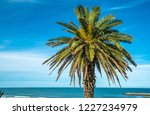 palm tree on the background of... | Shutterstock . vector #1227234979