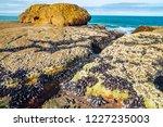 unusual background of mussels ... | Shutterstock . vector #1227235003