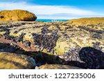 unusual background of mussels ... | Shutterstock . vector #1227235006