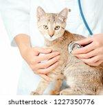 unrecognizable female... | Shutterstock . vector #1227350776