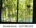 bamboo forest to look out of... | Shutterstock . vector #1227381103