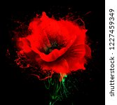 Beautiful Red Poppy With...