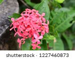 beautiful  spike  flower ... | Shutterstock . vector #1227460873