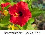 Red Hibiscus Flower In Thailand.