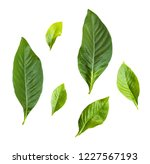 set of green leaves isolated on ... | Shutterstock . vector #1227567193