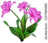 isolated pink flowers | Shutterstock . vector #1227584680
