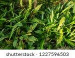 backyard garden in shade and... | Shutterstock . vector #1227596503