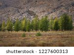 south africa trees   Shutterstock . vector #1227600313