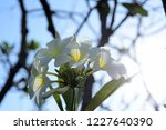 colorful flowers.group of...   Shutterstock . vector #1227640390