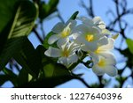 colorful flowers.group of...   Shutterstock . vector #1227640396