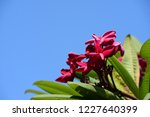 colorful flowers.group of...   Shutterstock . vector #1227640399