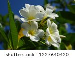 colorful flowers.group of...   Shutterstock . vector #1227640420