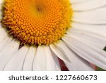 macrophoto with selective focus ... | Shutterstock . vector #1227660673