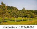 Tree Land With Apple Trees