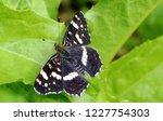black butterfly on leaf   Shutterstock . vector #1227754303