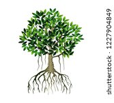 Tree And Roots Vector  Mangrov...