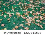 leaf on the green grass | Shutterstock . vector #1227911539