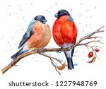 Two Bullfinches On A Hawthorn...