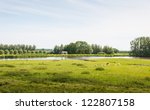 Rural Landscape With Sheep And...