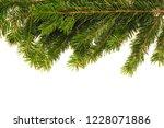 christmas tree branch on white... | Shutterstock . vector #1228071886