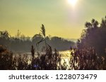 dry reed on the lake  reed...   Shutterstock . vector #1228073479