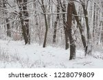 Winter In The Forest With...