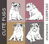 adorable black and white pug... | Shutterstock .eps vector #1228091263