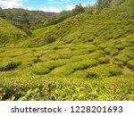 lush green tea plantations in... | Shutterstock . vector #1228201693