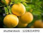 closeup of yellow citrus fruit... | Shutterstock . vector #1228214593