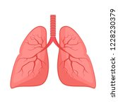 human anatomy. lungs  internal... | Shutterstock .eps vector #1228230379