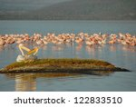Birds At Lake Nakuru National...