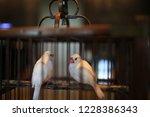 bird in cage | Shutterstock . vector #1228386343