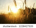 flower grass waver in the wind... | Shutterstock . vector #1228427320