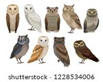 Stock vector flat vector set of different species of owls wild forest birds flying creatures elements for 1228534006