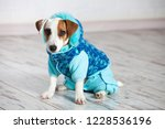 dog in winter clothes | Shutterstock . vector #1228536196