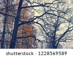 autumn background with branches ... | Shutterstock . vector #1228569589