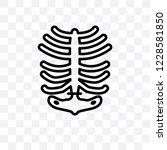 human ribs vector linear icon... | Shutterstock .eps vector #1228581850