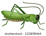 Illustration Of A Grasshopper...