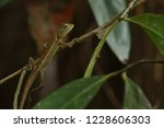 oriental garden lizard or... | Shutterstock . vector #1228606303