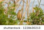 a perched bird | Shutterstock . vector #1228630213