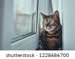 The Cat Sits And Looks Out The...