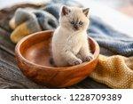 Stock photo cute little kitten in bowl 1228709389