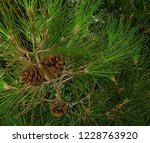 green pine branch christmas... | Shutterstock . vector #1228763920