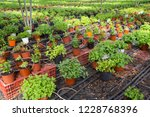picture of seedlings of... | Shutterstock . vector #1228768396