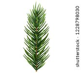 one single realistic spruce or... | Shutterstock .eps vector #1228798030
