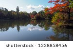 leaves color change in the park ... | Shutterstock . vector #1228858456