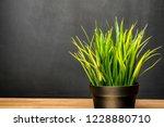 green houseplant on the desk at ...   Shutterstock . vector #1228880710