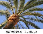 green palm against blue clear... | Shutterstock . vector #1228922